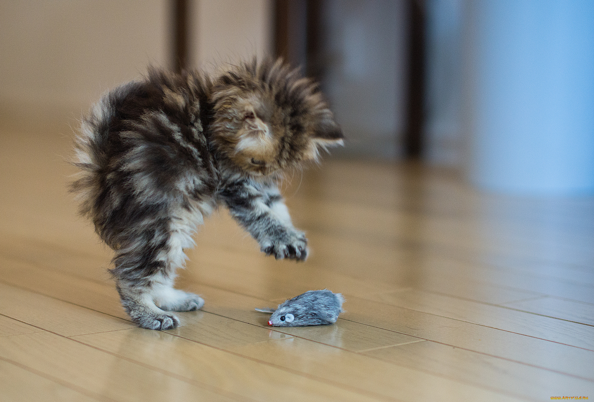 Картинки маленькие смешные котята, аву кошки аниме
