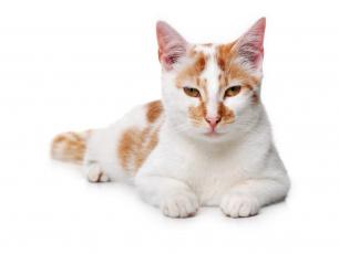 Картинка животные коты кошка взгляд