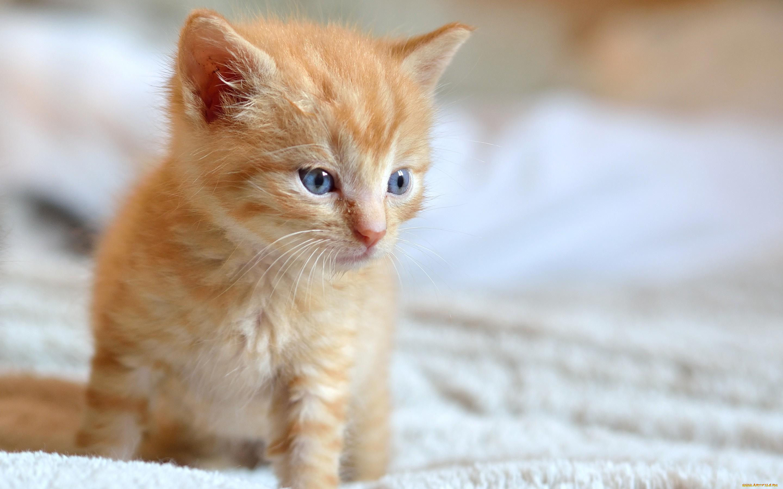 Айди картинки котика, солнышком для ватсап