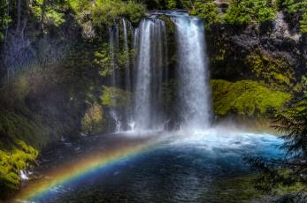 природа водопад деревья радуга  № 70366 загрузить