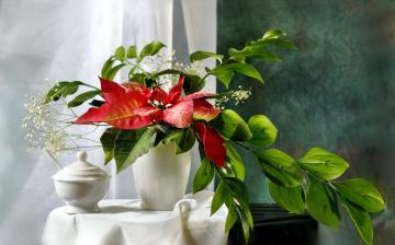 обоя цветы, букеты,  композиции, гипсофила, пуансеттия