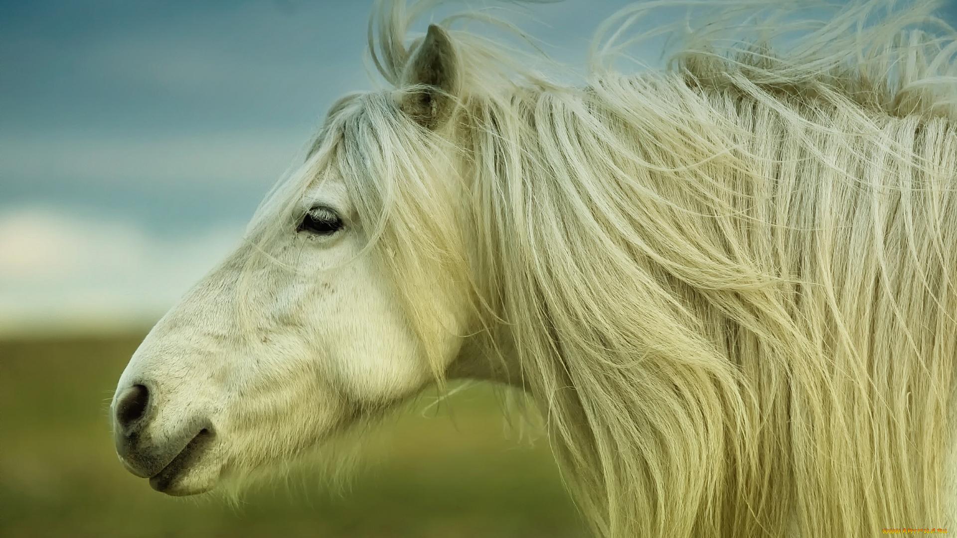 лошадь с гривой  № 3127227 бесплатно