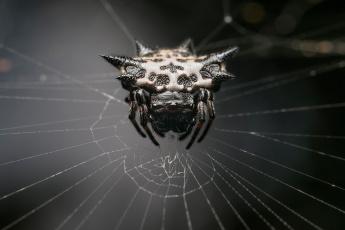 обоя животные, пауки, web, spider, monster, arachnid