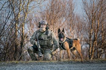 обоя оружие, армия, спецназ, солдат, собака