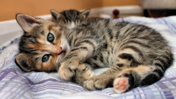 Картинка животные коты котик