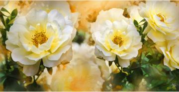 Картинка рисованные цветы шиповник