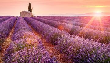 обоя цветы, лаванда, лучи, закат, сарай, ряды, поле