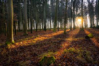 Картинка природа лес деревья
