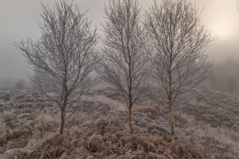 Картинка природа деревья