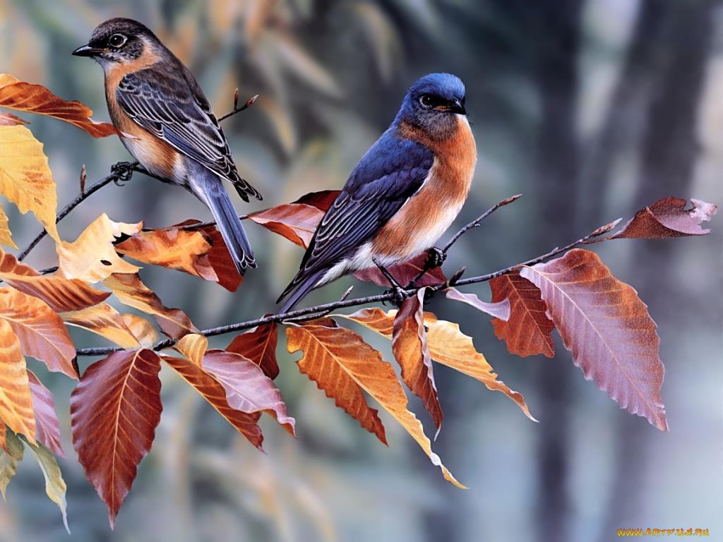 Красивые открытки с птицами осенью