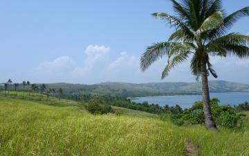 Картинка природа тропики