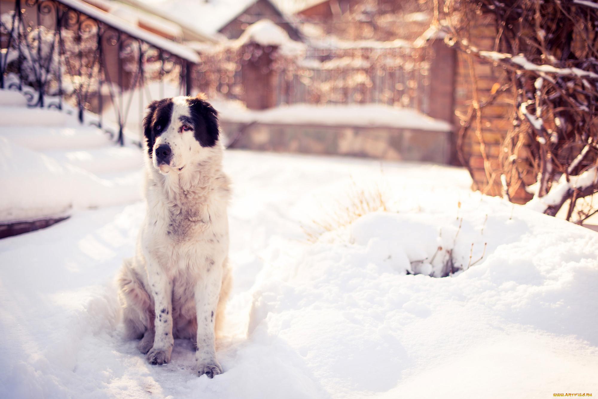 щенок снег puppy snow  № 2001790 бесплатно