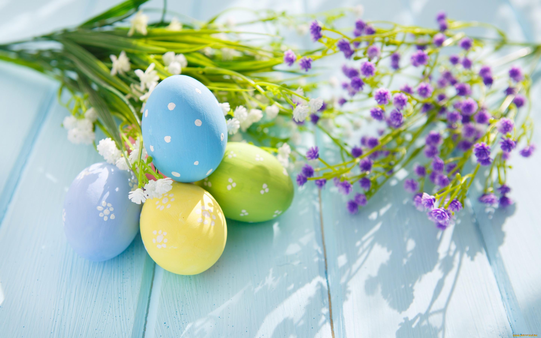 природа цветы яйца праздники яйца загрузить