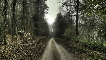 обоя природа, дороги, осень, лес, дорога