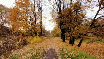 Картинка природа парк осень листья листопад