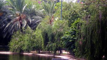 обоя природа, парк, водоем, пальмы