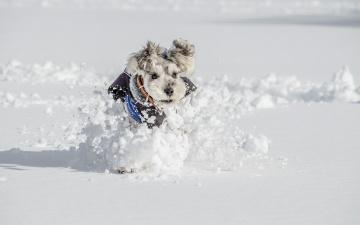 Картинка животные собаки друг взгляд собака зима снег