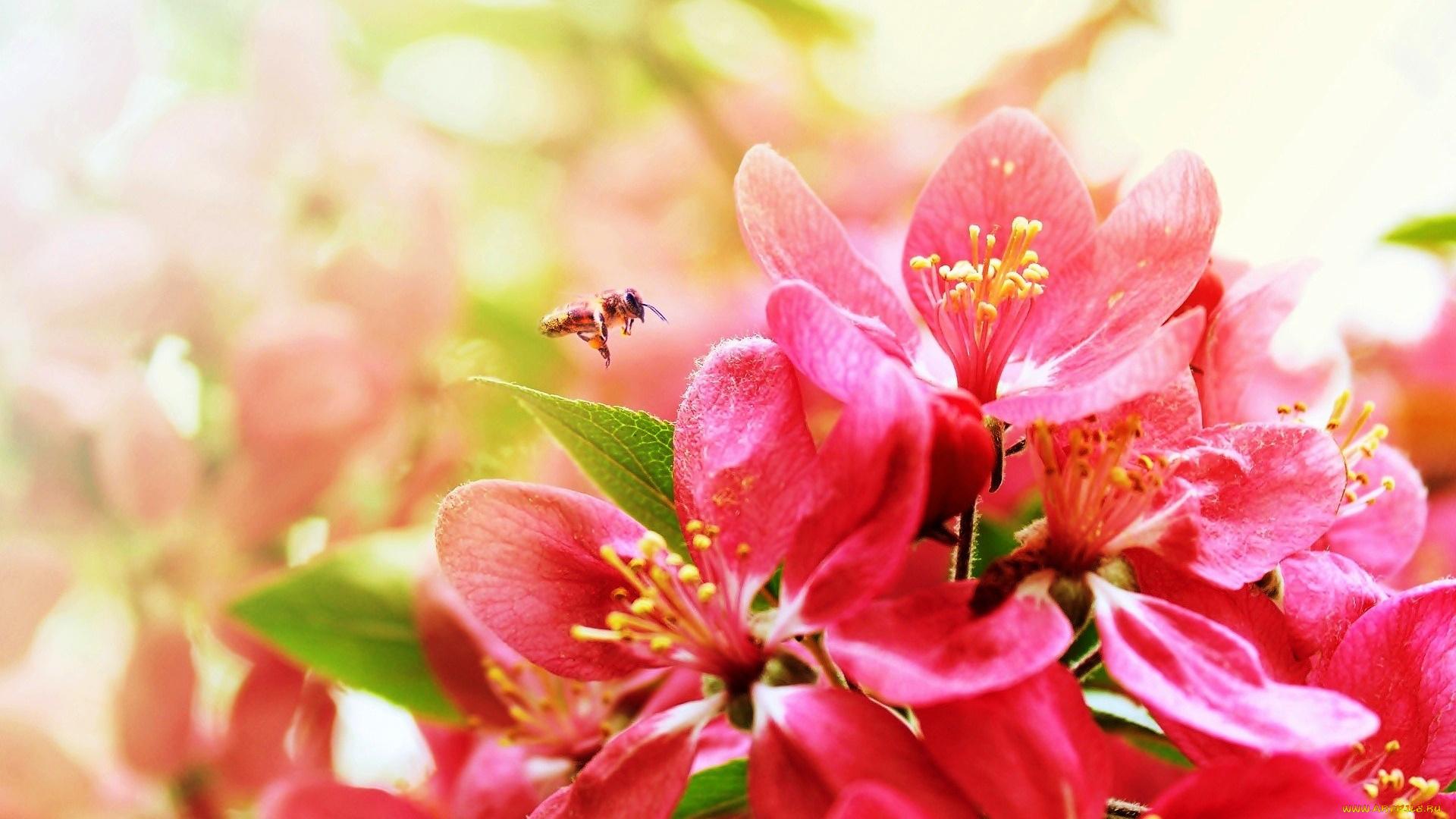 Цветы картинки весна