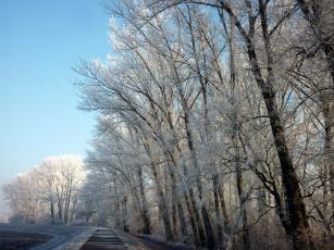 обоя природа, зима, иней, деревья