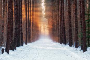 обоя природа, дороги, утро, снег, лес, зима, холод