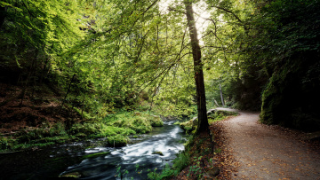 обоя природа, дороги, дорога, лес