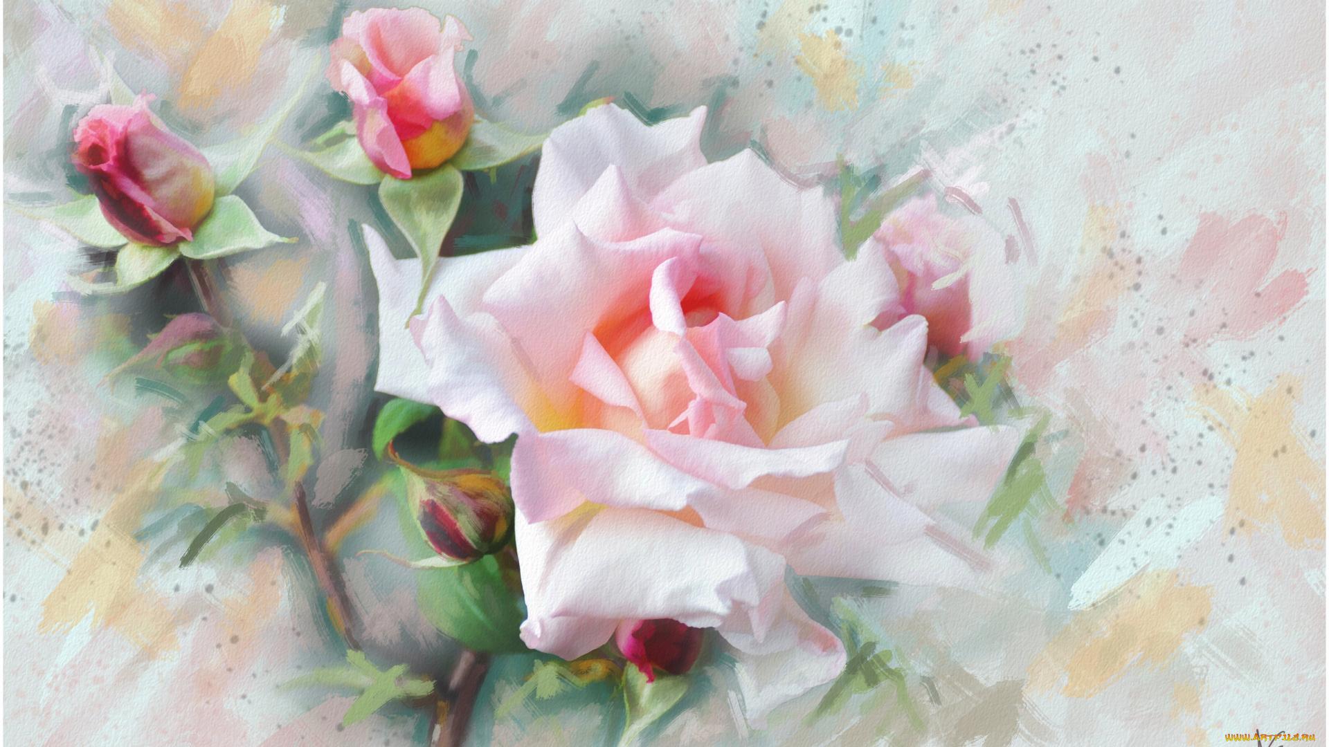 Картинки с цветами красивые нарисованные акварелью, паук открытка картинки