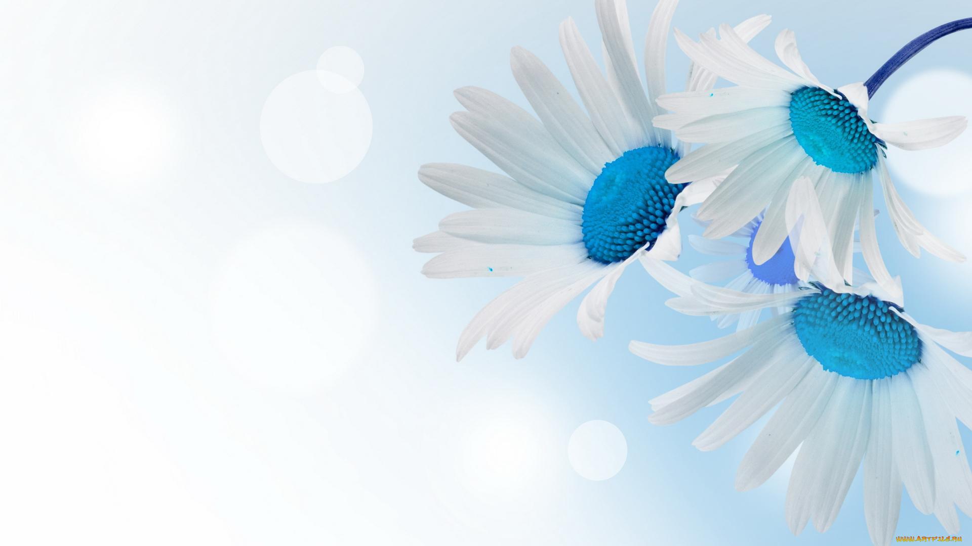 цветы синие белые без смс