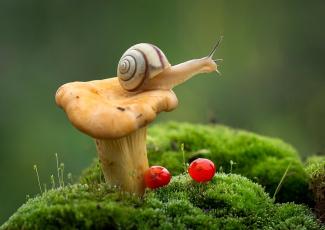 обоя животные, улитки, макро, улитка, ягоды, лисичка, мох, гриб