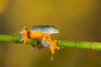 обоя животные, лягушки, frog, цветок, лягушка, flower