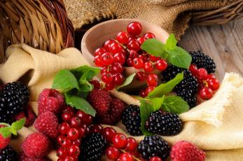 обоя еда, фрукты,  ягоды, малина, ежевика, красная, смородина