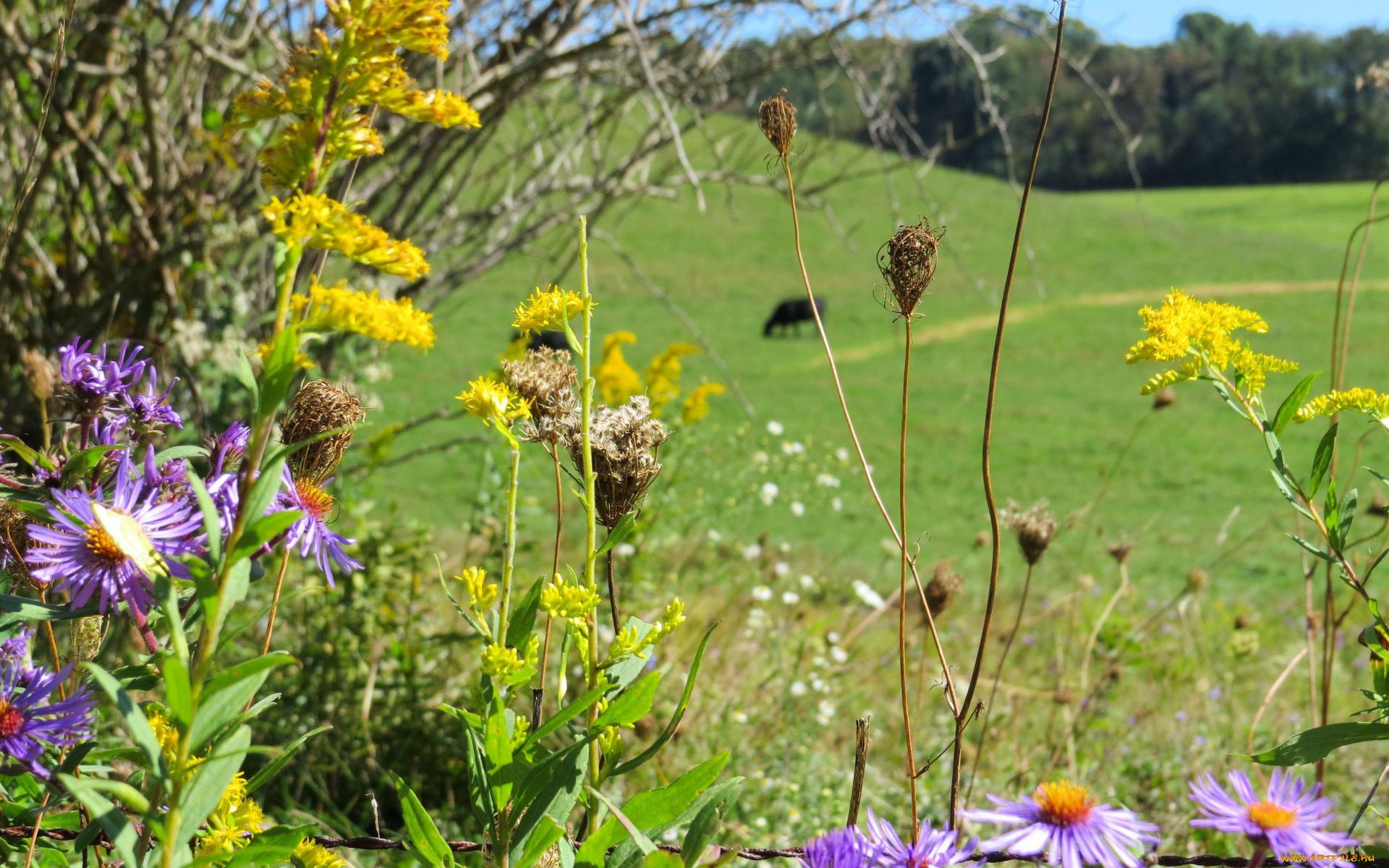Полевые цветы травы купить минск, можно оптом купить