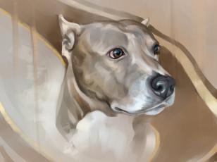 обоя рисованное, животные,  собаки, морда