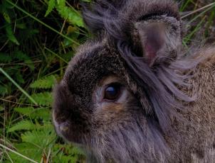 обоя животные, кролики,  зайцы, кролик