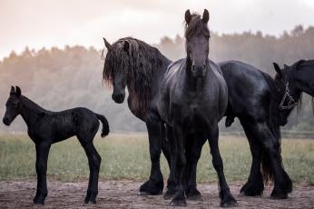 обоя животные, лошади, handsome, animal, horse, красавцы, животное