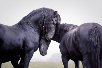обоя животные, лошади, хвост, грива, окрас, лошадь