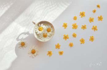 обоя цветы, ромашки, вода, ромашка, чашка