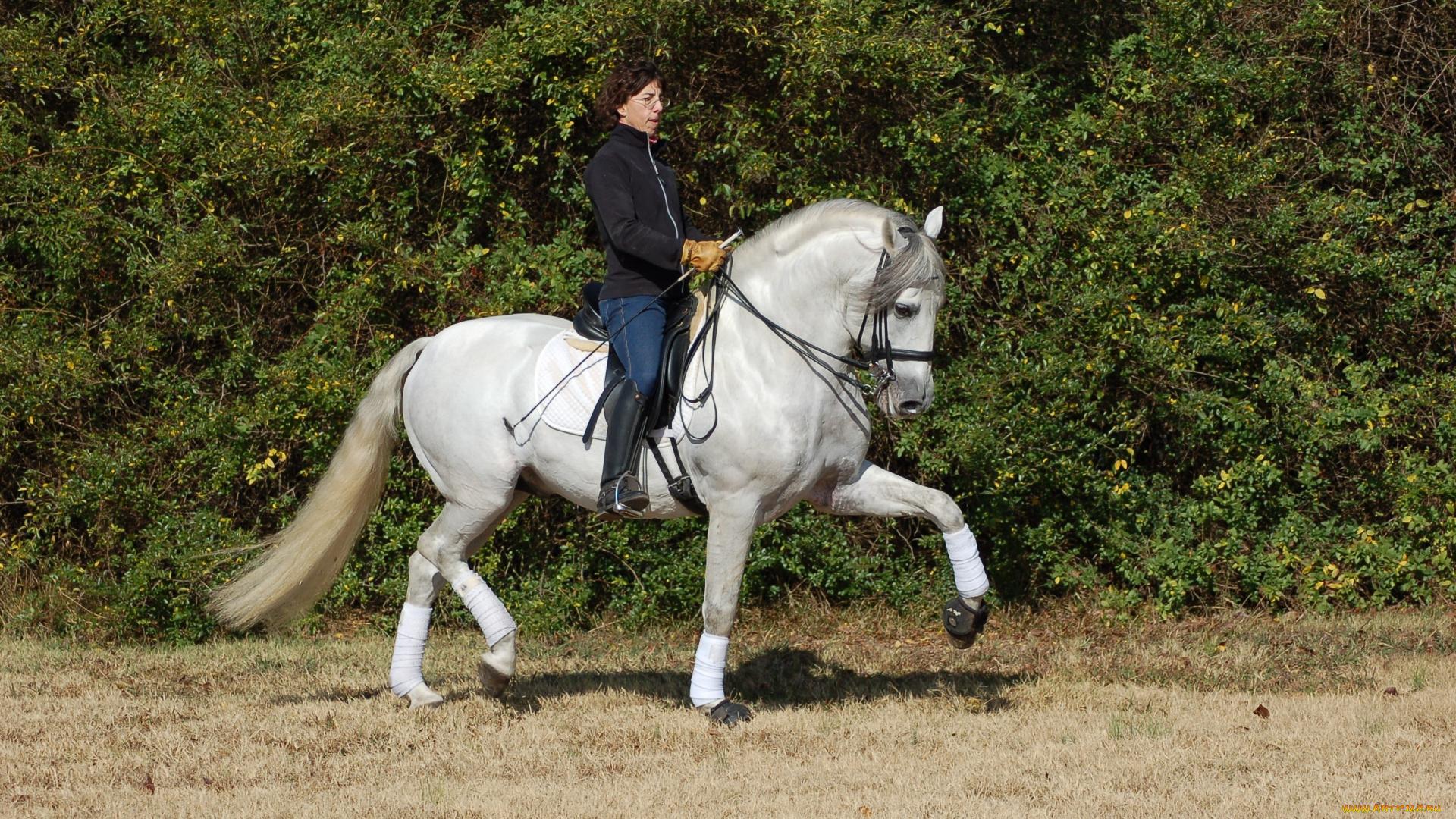 Картинки с всадником на лошади