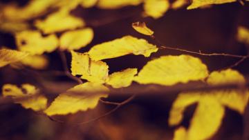Картинка природа листья осень ветка желтые