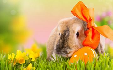 обоя животные, кролики,  зайцы, весна, трава, боке, природа, яйцо, праздник, цветы, бант, easter, пасха, нарциссы, кролик