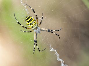 обоя животные, пауки, паук, макро