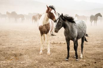 обоя животные, лошади