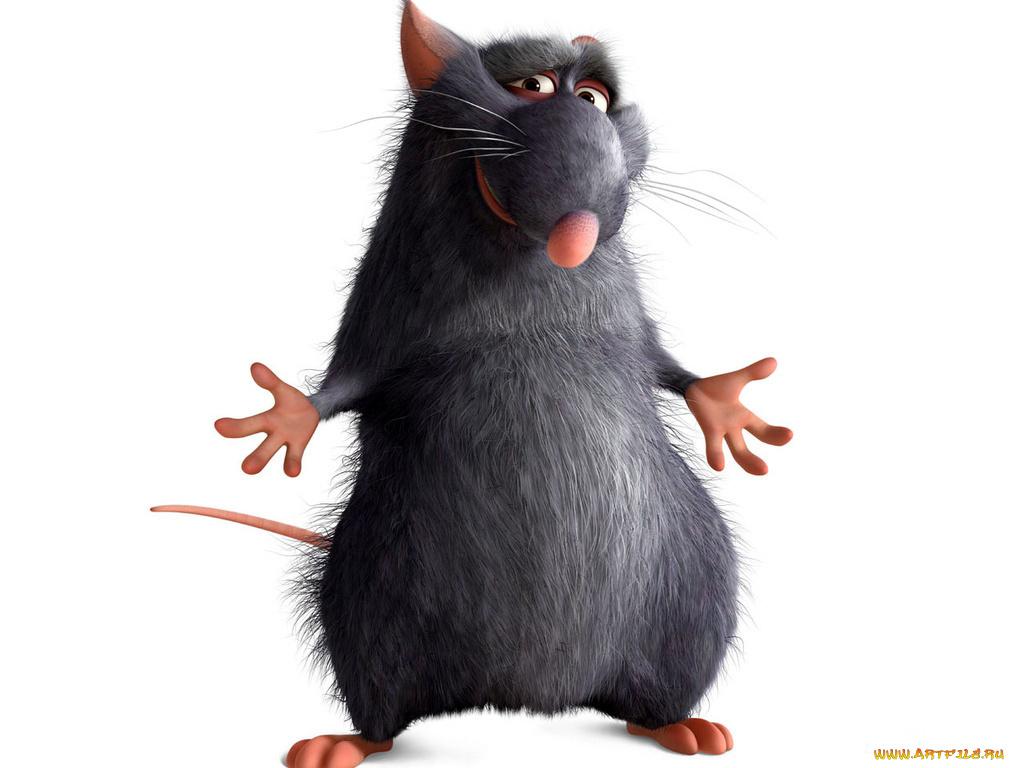 Картинка крыса прикольная