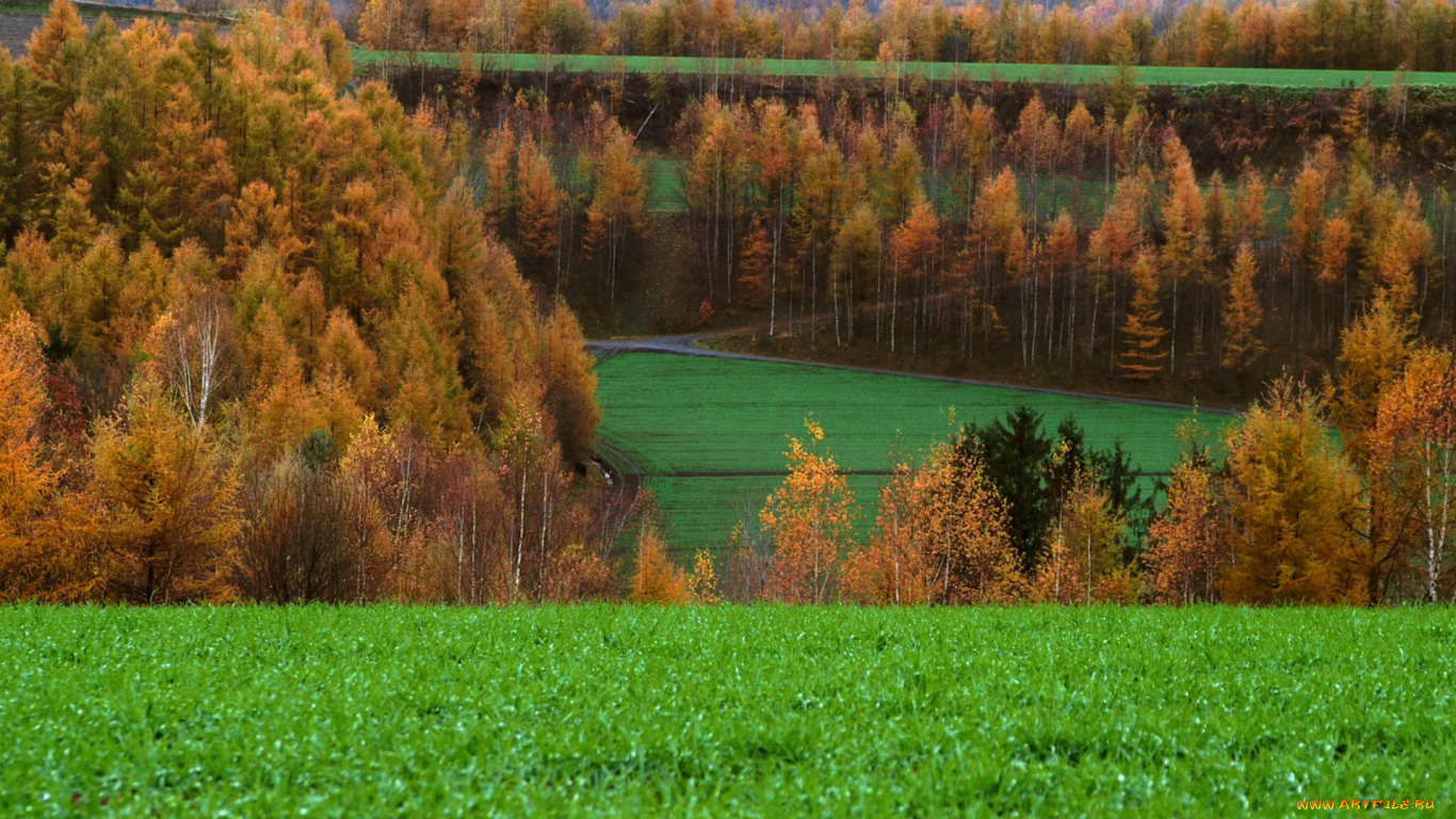 поле лес field forest без смс