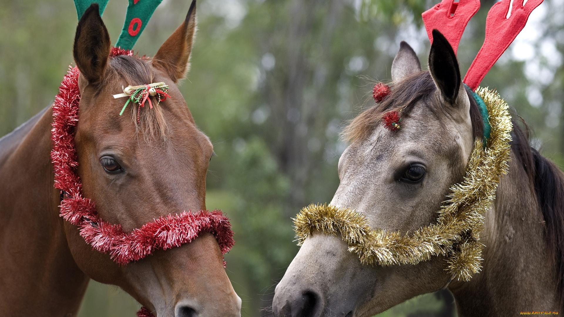 Картинки с приколами о лошадях
