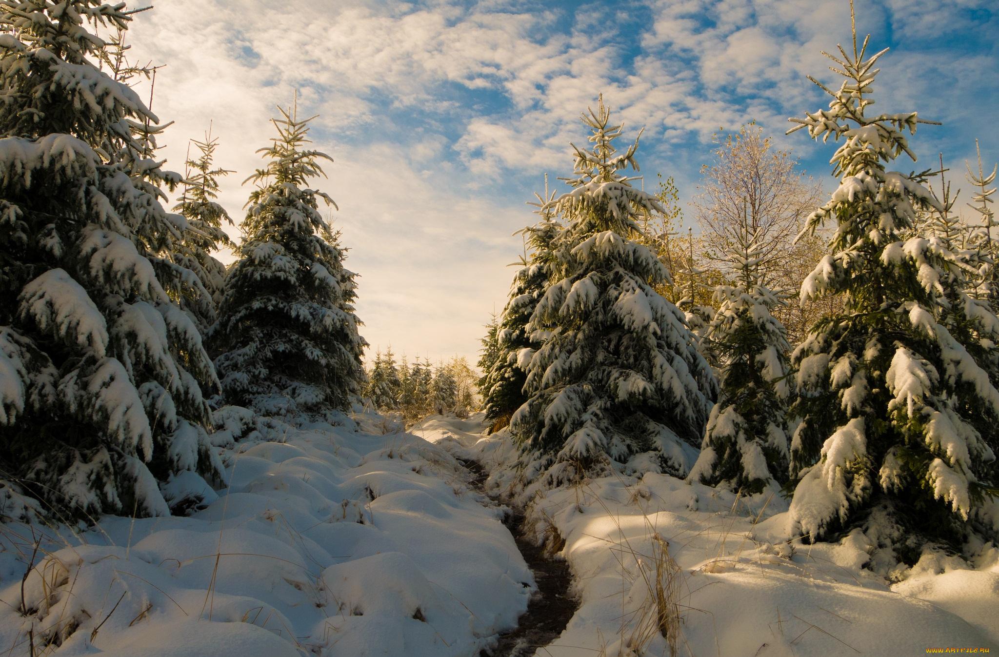 ели снег зима ate snow winter бесплатно
