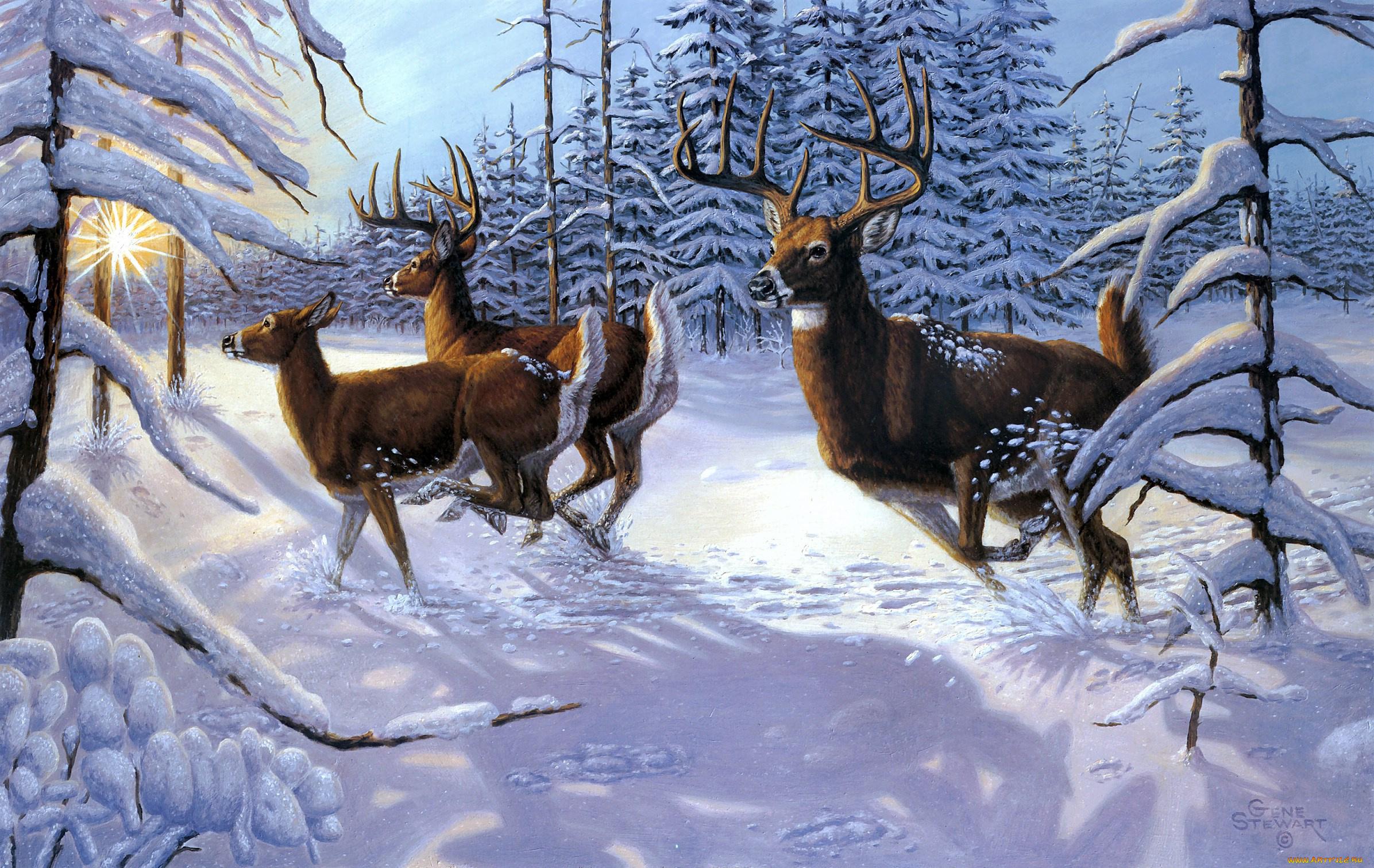 Зубр в снегу без смс