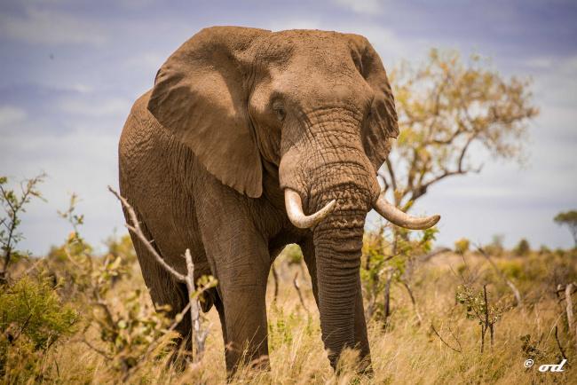 домового если слоны в южной америке характер освещения