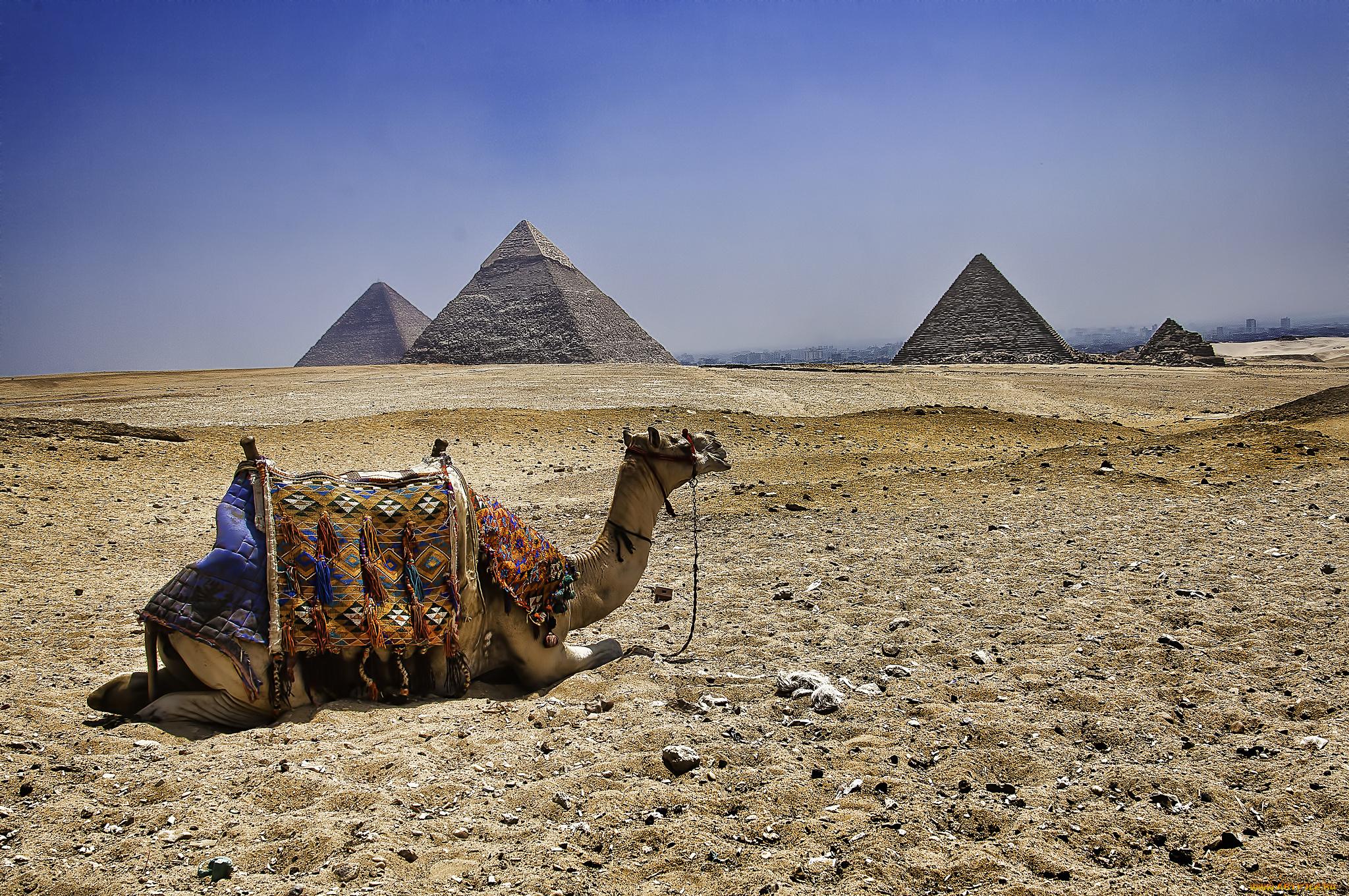 Надписью, картинки прикольные пустыня