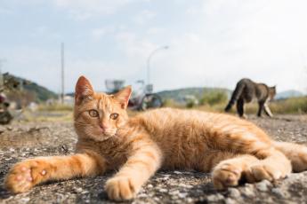 Картинка животные коты кот отдых лежит рыжий