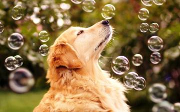 Картинка радость+жизни животные собаки собака радость жизни мыльные пузыри